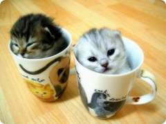 kittens in a cup