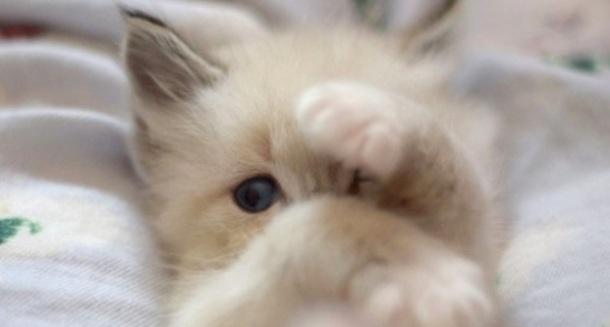 kitten42